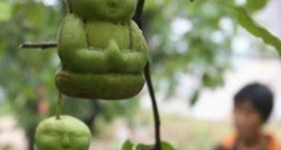中国で「赤ちゃんみたいな洋梨」が売られているらしい