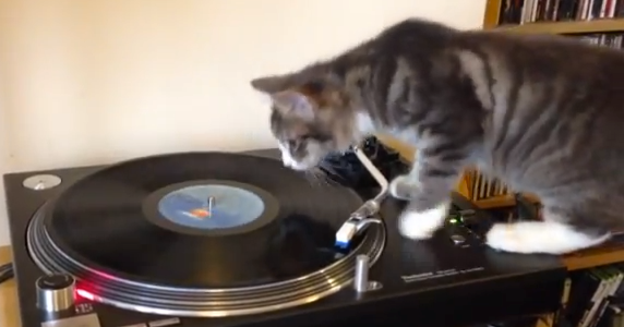 音楽にのめり込み過ぎた『DJキャット』の結末とは!!(動画)