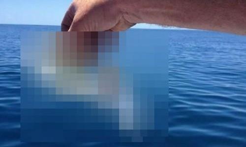 【画像】 アニメでも見た事ない!! とんでもない姿の魚が発見される!!