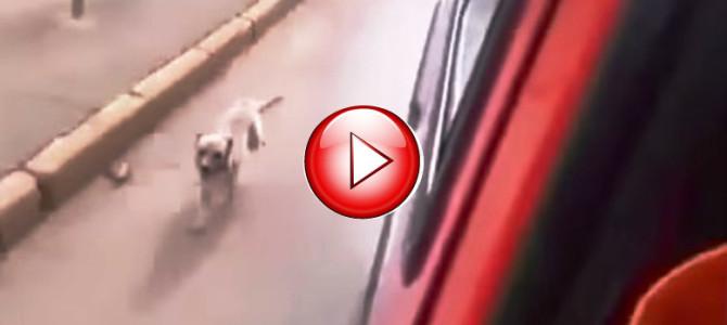 救急車に乗せられたご主人を追いかけて懸命に走る犬の姿が心に刺さる・・