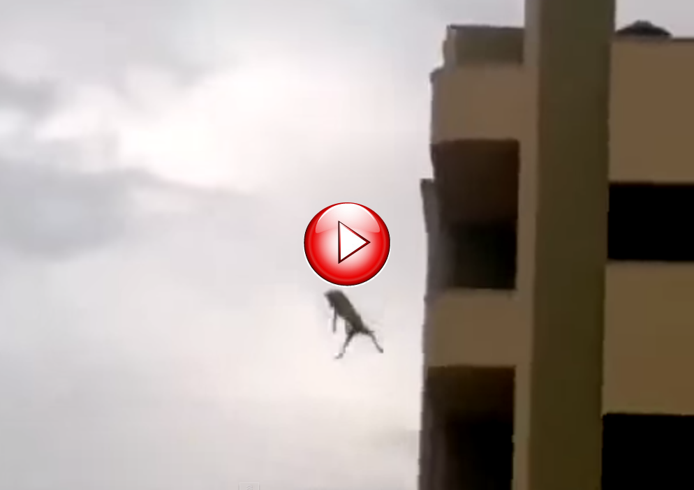 Crazy-dog-jumps-from-roof-of-multi-storey-building-and-then-runs-off-YouTube