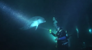 夜間撮影をしていたダイバーに一匹のイルカが寄ってきた!よく見ると釣り糸が!?