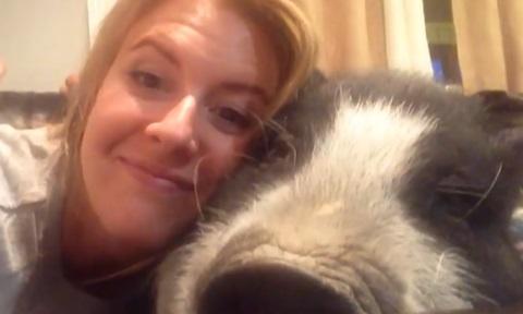 飼い主がハグすると「ブヒッ」と反応する豚が超人気に!!