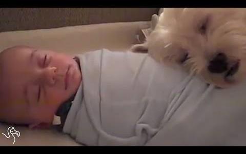 仲良し!赤ちゃんと一緒に寝るワンコ♡