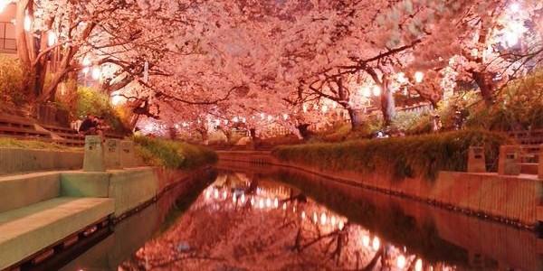 全国を彩った幻想的で美しい「桜の写真」まとめ