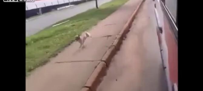 救急車を追いかけてくる犬と、その犬を乗せてあげた救急隊員の心温まる映像