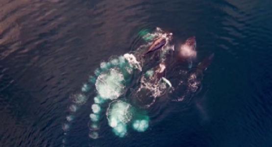 息を飲む美しさ!南極をドローンで上空から撮影した映像!!