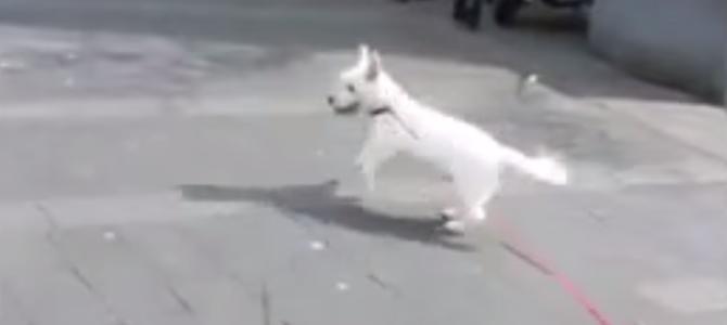 【感動】耳の聞こえない老犬をロックコンサートに連れてきたら、重低音を体で感じ嬉しそうに大はしゃぎ!!