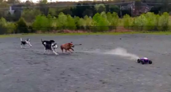 ラジコンを全力疾走で追いかける犬たち!犬にとってラジコンは最高の遊び仲間!!