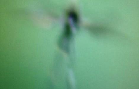 【衝撃画像】英国で「妖精」の姿を激写!