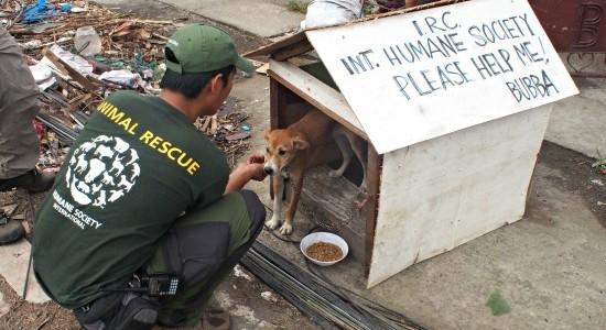 二本足でも四つ足でも尊い命…ネパール地震で被災した動物たちを助ける人々