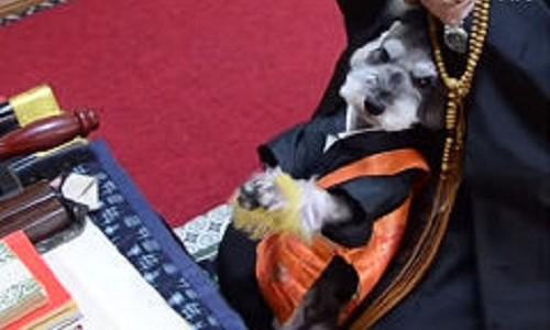 犬住職が大人気?!彼が念じる理由とは?