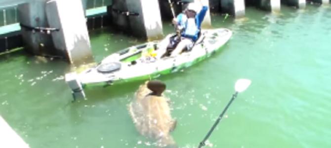 カヌーで釣りをしていたら化け物級の巨大魚が釣れた!!