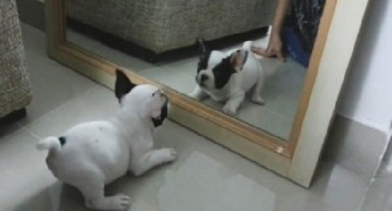 鏡 vs 子犬 可愛すぎヤバイ!!