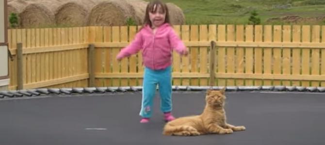 猫と女の子が一緒にトランポリンをやった結果