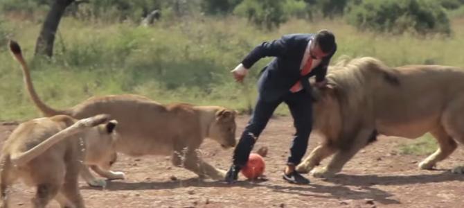 ライオンたちとサッカーする謎のビジネスマン!?