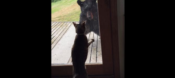 家にやってきた熊を撃退!とっても頼りになる猫!!
