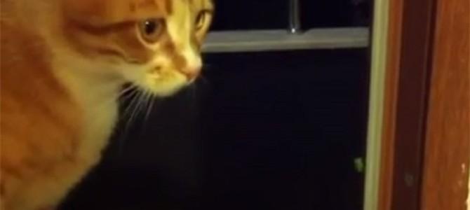 オェェェェェ!カメムシの匂いにやられる猫!!