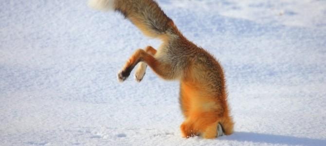 めい一杯ジャンプをしたが失敗した動物の映像集!