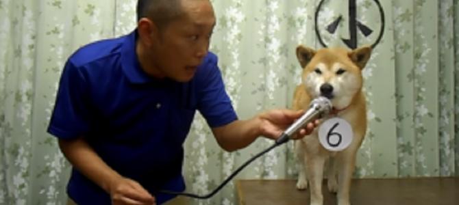 柴犬マリちゃんと飼い主のコント最新作「小声コンテスト」がまたまた面白いw