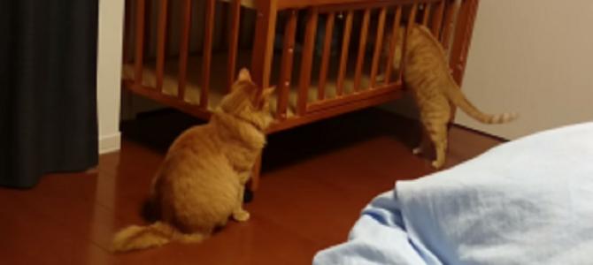 猫がベビーベットを調査していたら、予想以上の展開に!