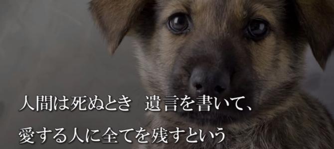「もし、僕が死んだら、、」犬の遺言に綴られた言葉が胸に刺さる。