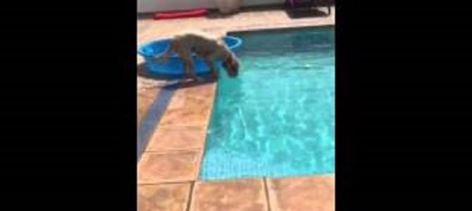 プールの中のボールが欲しい犬がとった作戦がすごい!