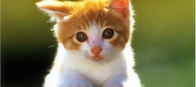 車の上から屋根へ猫が大ジャンプした結果!?