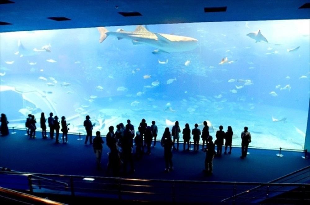 churaumi-aquarium-image44