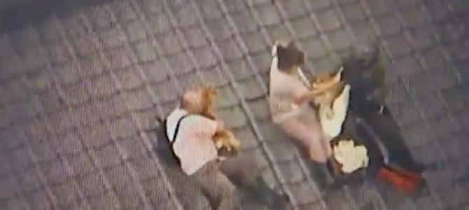 自衛官と、ペットと屋根に避難した家族の会話が話題に!