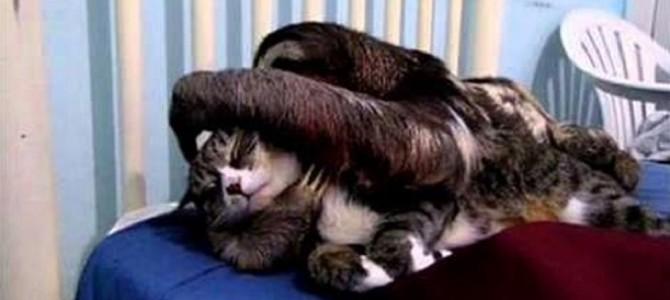 ナマケモノに懐かれてしまった猫、困り果てる