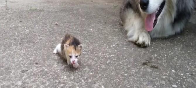 赤ちゃん猫に恐る恐る接する犬♡