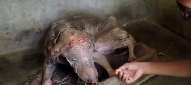 路上で病気の犬を保護!2カ月に及ぶ献身的なケアで見違える姿に!