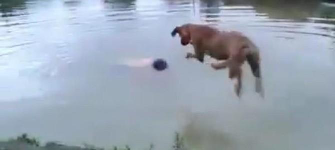 川で溺れている猫を犬が救助!その方法がナイス!
