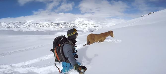 スノーボードをしていたら、雪で動けなくなっている凍死寸前の馬を発見!
