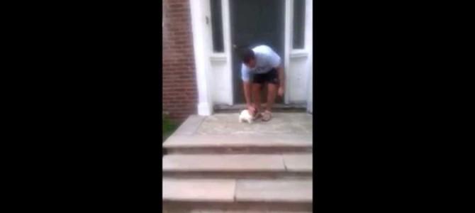 玄関の階段がこわい子犬。階段を避けて行こうとした結果ww