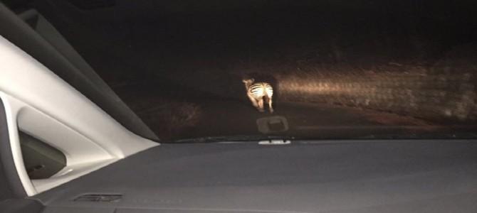 ドライブ中の女子高生の目にとまった衝撃の光景!
