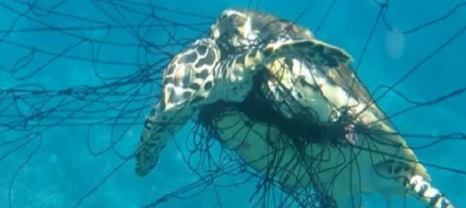 胸が痛みませんか?人間が捨てたゴミで苦しむ動物たちの悲痛な姿