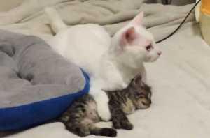 「地震だ!」子猫を守る先輩猫の優しさに惚れた!