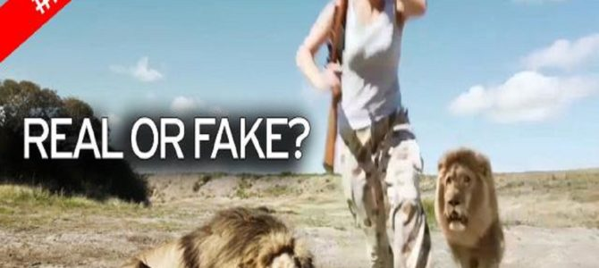 遊びで殺した野生ライオンと記念撮影していたら、仲間のライオンが復讐してきた!