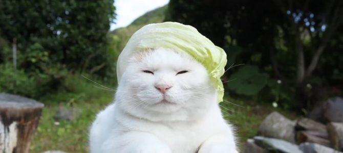 レタスのカツラをかぶる猫さん。穏やかな表情がじわじわくる