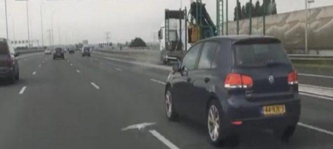 高速道路をハトが飛ぶ! そのスピード、なんと「時速100キロ」!?